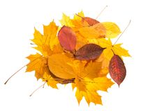 Bright beautiful autumn leaves carelessly scattered. Isolated on white background Stock Photo