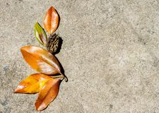 Bright autumn leaves lie on the pavement royalty free stock images