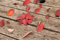 Bright beautiful autumn leaves on a wooden background Stock Photography
