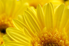 Bright beautiful background of yellow flowers Royalty Free Stock Photo