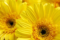 Bright beautiful background of yellow flowers Stock Photo