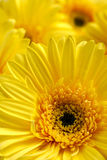 Bright beautiful background of yellow flowers Stock Photos