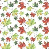 Bright beautiful colorful leaves autumn green red brown maple and rowan pattern. Watercolor hand sketch Stock Image