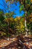 Bright Beautiful Fall Foliage on a Stunning Maple Trees in Texas Stock Image