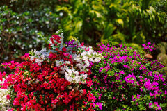Bright beautiful flowers. Royalty Free Stock Photography