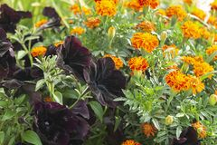 Bright flowerses on background of the green herb Royalty Free Stock Images