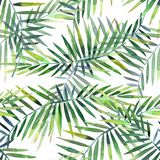 Bright beautiful green herbal tropical wonderful hawaii floral summer pattern of a tropic palm and monstera leaves watercolor. Hand illustration. Perfect for vector illustration