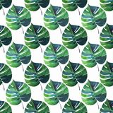 Bright beautiful green herbal tropical wonderful hawaii floral summer pattern of a tropic palms watercolor hand illustration. Perfect for textile, wallpapers Stock Image