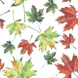 Bright beautiful green yellow red brown leaves autumn maple and pattern watercolor. Hand illustration Royalty Free Stock Photography