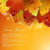 Bright beautiful leaves with autumnal abstract backgrounds Stock Photos