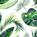 Bright beautiful lovely green herbal tropical wonderful hawaii floral summer pattern of a monstera banana tropic palm leaves. Watercolor hand illustration vector illustration