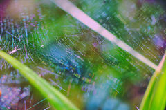 Bright beautiful macro with spider web Stock Images