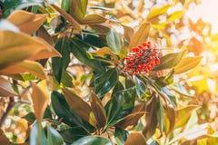 Bright beautiful Mediterranean flora. Berry stock photography