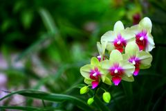 Beautiful multi colored orchids royalty free stock images