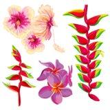 Bright beautiful vector tropical flowers Stock Photos