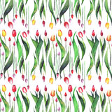 Bright beautiful vertical seamless pattern of tulips red yellow pink purple lavender flowers watercolor hand sketch Royalty Free Stock Images