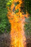 Bright big bonfire while burning a large number of garbage branches. For your design stock photos