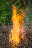 Bright big bonfire while burning a large number of garbage branches. For your design royalty free stock images