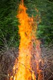 Bright big bonfire while burning a large number of garbage branches. For your design stock images