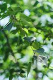 Bright birch branches in the sunlight stock photos