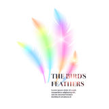Bright bird feathers on a white background. Royalty Free Stock Images