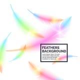 Bright bird feathers on a white background. Stock Photos