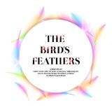 Bright bird feathers on a white background. Royalty Free Stock Photos