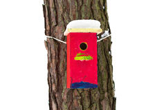 Bright birdhouse. Bright birdhouse nailed to a tree. Tree with starling house isolated from the background Stock Photography