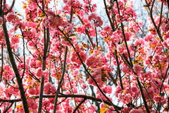 Bright blossoms in spring Stock Images