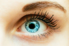 Bright Blue Eye Close Up Royalty Free Stock Photo
