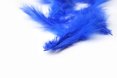 Bright blue feathers on a white background Stock Image