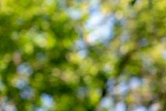 Natural blurred background of the leaves of trees and the blue sky with the effect of the piercing. Beautiful creative. Bright blue green and yellow bokeh Royalty Free Stock Photo