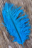 Bright blue quill Stock Photography