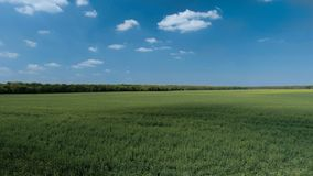 Bright blue skies and green fields royalty free stock image