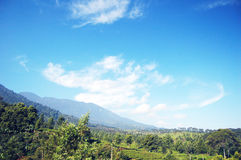 A bright blue sky over the peak. A fresh morning with bright blue sky over the peak in Cibodas, Puncak, West Java, Indonesia royalty free stock images