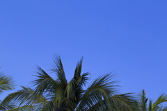 Bright blue sky and the palm leaves. At the bottom Stock Photo