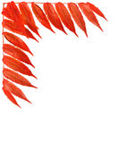 Bright border with orange leaves Stock Images