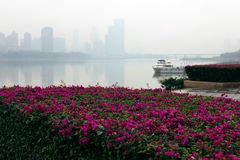Bright bougainvillea. The riverside river, white foggy, the shore flowering bougainvillea, bright colors, beautiful scenery Stock Photography