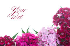 Bright bouquet of carnations Stock Photography