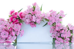 Bright bouquet of carnations Stock Photos