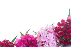 Bright bouquet of carnations Royalty Free Stock Photo