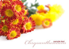 Bright bouquet of chrysanthemums Stock Photo