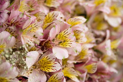 Bright bouquet,flowers with water drops. Close-up bright bouquet with water drops Stock Image
