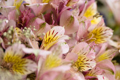 Bright bouquet,flowers with water drops. Close-up bright bouquet with water drops Royalty Free Stock Image