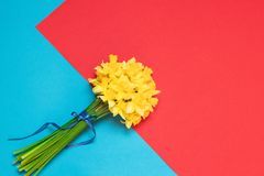 Bright bouquet, fragrant spring flowers, daffodils on a blue background with space for text. Bouquet of fresh yellow daffodils in female hands on background with royalty free stock photos