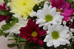 A bright bouquet of gerberas and chrysanthemums entwined with green sprigs of pistachio tree. A bright bouquet of red and white gerberas, yellow chrysanthemums royalty free stock image