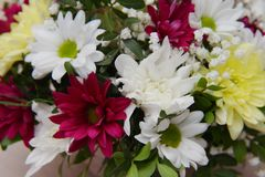 A bright bouquet of gerberas and chrysanthemums entwined with green sprigs of pistachio tree. A bright bouquet of red and white gerberas, yellow chrysanthemums royalty free stock photo