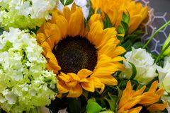 Bright bouquet with yellow sunflowers and rose, pink eustoma and green viburnum floral background stock image