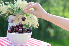 Bright bowl full of sweet cherries Stock Photos