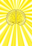 Bright Brain Royalty Free Stock Image